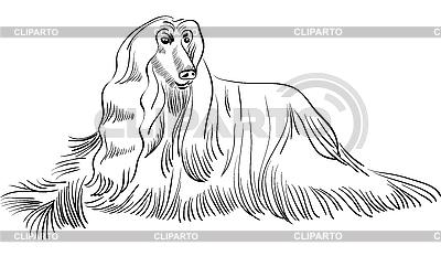 Эскиз афганской гончая собака лежала | Векторный клипарт |ID 3071534