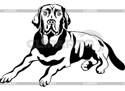 Pies rasy labrador retriever | Klipart wektorowy |ID 3101742