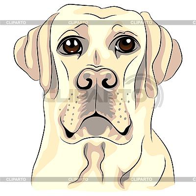 Biały pies rasy labrador retriever | Klipart wektorowy |ID 3106508