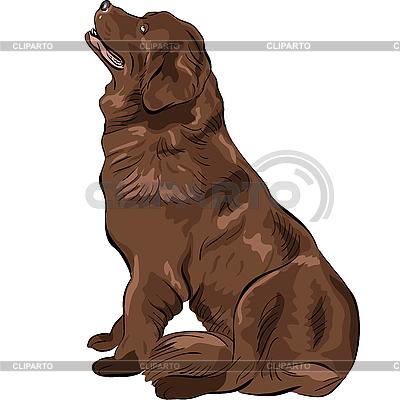 Hund Neufundland Zucht sitzen | Stock Vektorgrafik |ID 3120833