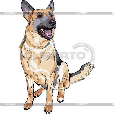 Deutsch Schäferhundezucht | Stock Vektorgrafik |ID 3140433