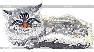 Kot syberyjski | Klipart wektorowy |ID 3141147