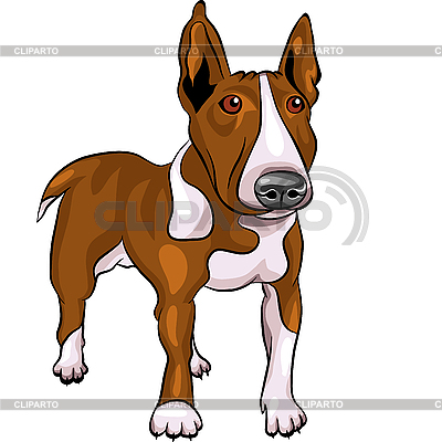 Cartoon Bull Terrier Hundezucht | Stock Vektorgrafik |ID 3174787