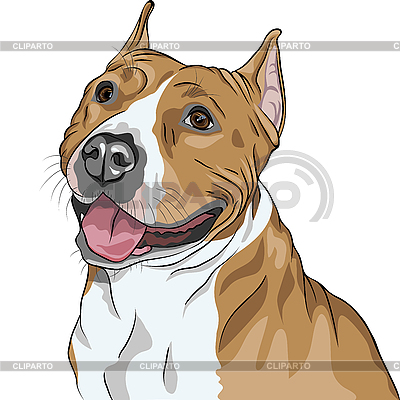 Pies rasy American Staffordshire Terrier | Klipart wektorowy |ID 3201108