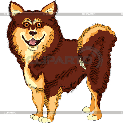 Dog breed lapphund | Stock Vektorgrafik |ID 3226526