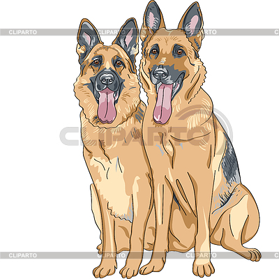 Color sketch two dog German shepherd breed | Klipart wektorowy |ID 3297591