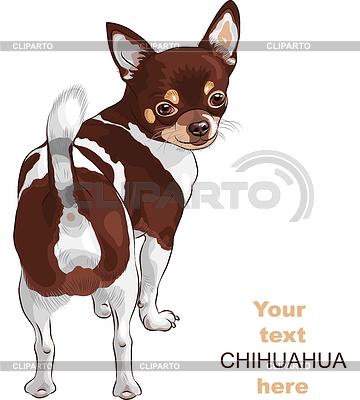 Szkic pies rasy chihuahua | Klipart wektorowy |ID 3340512