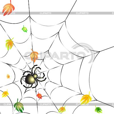 Spinnennetz im Herbst | Stock Vektorgrafik |ID 3052285