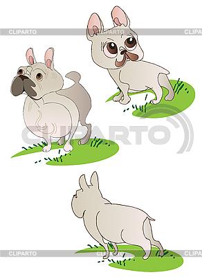 Drei Französische Bulldogge | Stock Vektorgrafik |ID 3063259