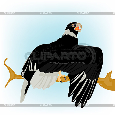 рисунок орла сидя