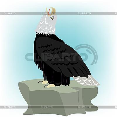 Adler auf einem Stein | Stock Vektorgrafik |ID 3077708