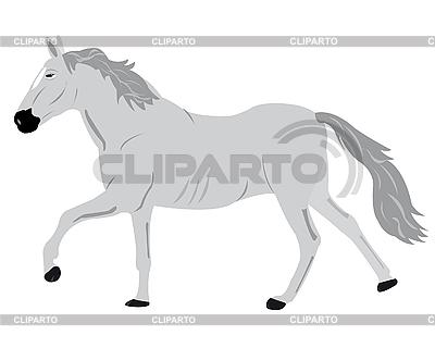 Pferd auf weißem hintergrund shipitsin evgeny