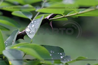 Капля воды на зеленых листьев после дождя | Фото большого размера |ID 3381514