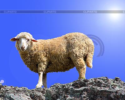 Schaf am Felsen | Foto mit hoher Auflösung |ID 3101305