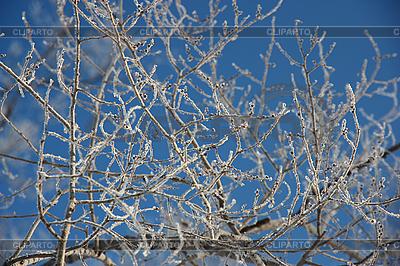 Zweige bedeckt mit Raureif | Foto mit hoher Auflösung |ID 3111281