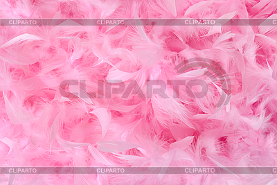 Fluffy Bird Feathers Pastel Colors Soft Romantic Background