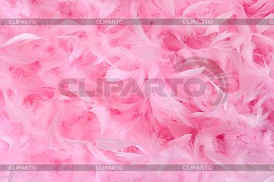 파스텔 색상 솜털 조류 깃털 | 높은 해상도 사진 |ID 3079263