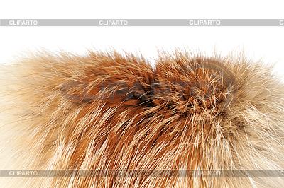 Fox winter fur | Foto stockowe wysokiej rozdzielczości |ID 3087809