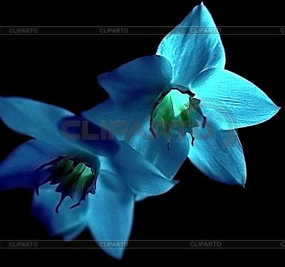 Niebieskie kwiaty | Foto stockowe wysokiej rozdzielczości |ID 3080451
