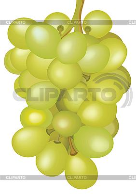 一串葡萄 | 向量插图 |ID 3080838