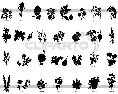 Jagody i kwiaty sylwetki | Klipart wektorowy |ID 3088094