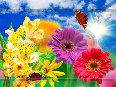 非洲菊花朵和蝴蝶 | 高分辨率照片 |ID 3120977
