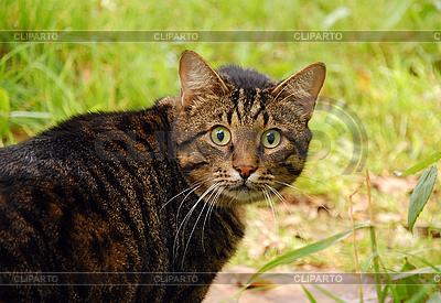 Astonished cat