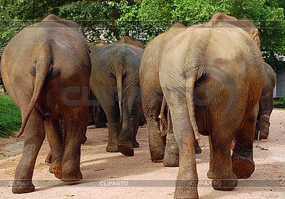 Elefanten | Foto mit hoher Auflösung |ID 3106133