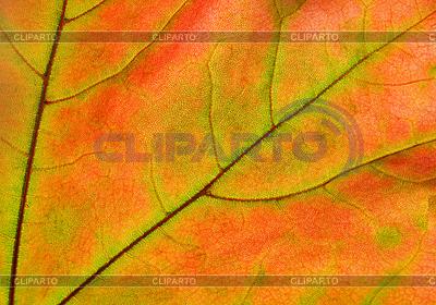 在阳光下泛着秋叶 | 高分辨率照片 |ID 3089253