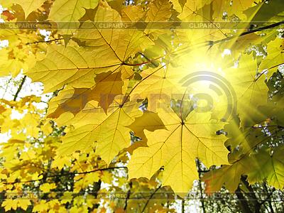 가을의 단풍 나무와 햇빛 | 높은 해상도 사진 |ID 3089268