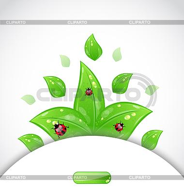 Szablon broszura z zielonych liści i biedronki | Klipart wektorowy |ID 3243975