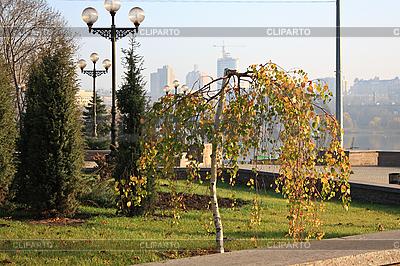 Kleine Birke im Stadtpark | Foto mit hoher Auflösung |ID 3089409