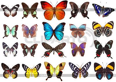 Verschiedene Schmetterlinge | Foto mit hoher Auflösung |ID 3094522