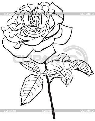 Große Rose | Stock Vektorgrafik |ID 3113242