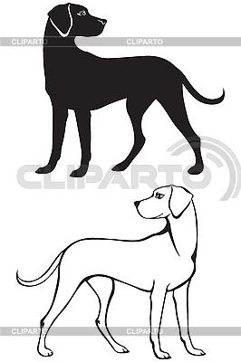 Собака контур