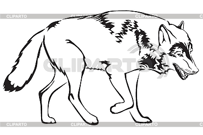 Kontur des Wolfes | Stock Vektorgrafik |ID 3189087