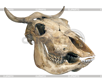 На Западе относятся к минским соглашениям, как к священной корове, хотя знают, что в конце не будет ни молока, ни мяса, - Чубаров - Цензор.НЕТ 7631