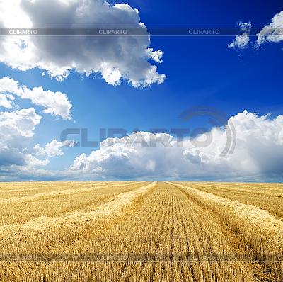 Ernte in Schwaden unter bewölktem Himmel | Foto mit hoher Auflösung |ID 3091260