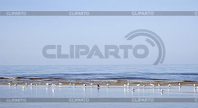 Rano na Zatoce Ryskiej | Foto stockowe wysokiej rozdzielczości |ID 3120522
