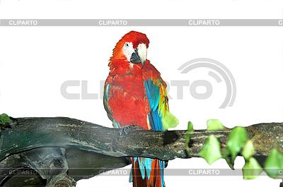Großer Papagei | Foto mit hoher Auflösung |ID 3123561