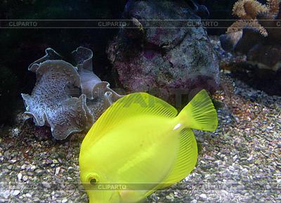 Goldfish flotando en la parte inferior