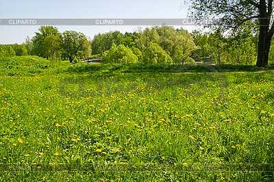 Grünes gras und gelben löwenzahn feld im stadtpark anna