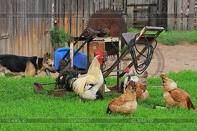 Landschaft im ländlichen Raum mit Nutztieren | Foto mit hoher Auflösung |ID 3127919