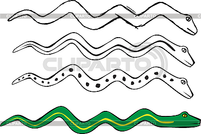 Описание stock vector vector snake skin with the pattern