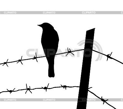 Silhouette des Vogels auf Stacheldraht | Stock Vektorgrafik |ID 3202725