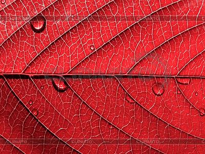 Czerwony liść z kroplami | Foto stockowe wysokiej rozdzielczości |ID 3249350