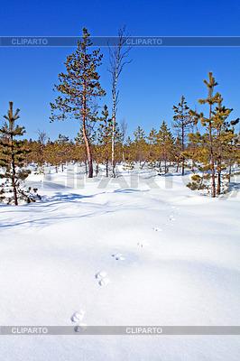 Spur Zobel auf Schnee | Foto mit hoher Auflösung |ID 3264003