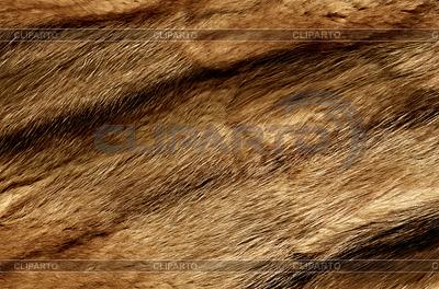 Nahaufnahme von einem Tier Fell Textur | Foto mit hoher Auflösung |ID 3240617