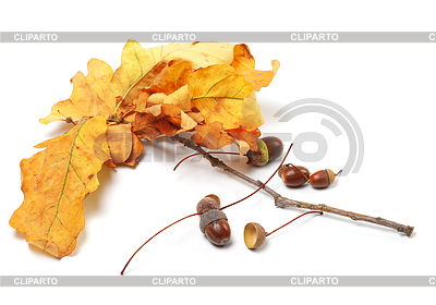 Jesienne liście dębu i żołędzie | Foto stockowe wysokiej rozdzielczości |ID 3377078