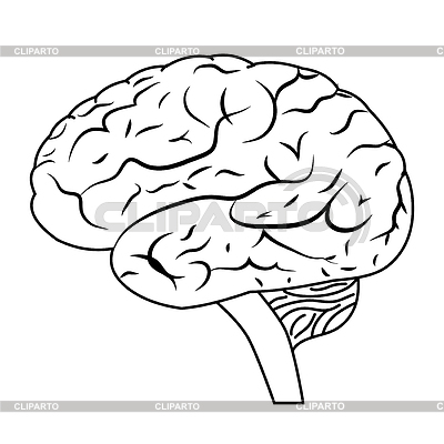 клипарт мозг: